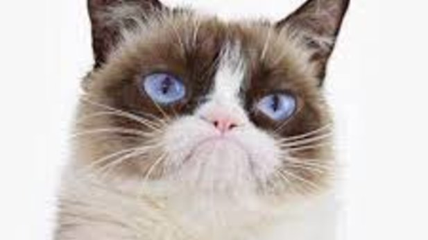RIP to the furry legend: Grumpy Cat